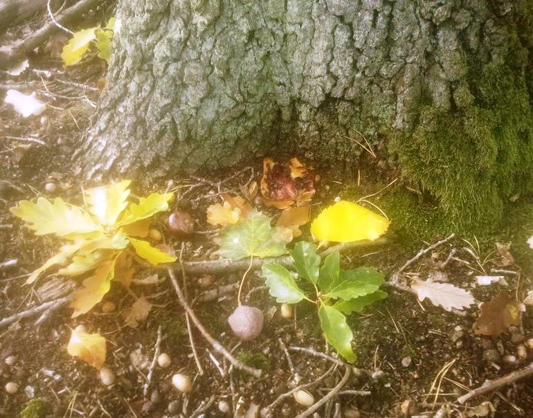 Ritual für Einheit und Wachstum